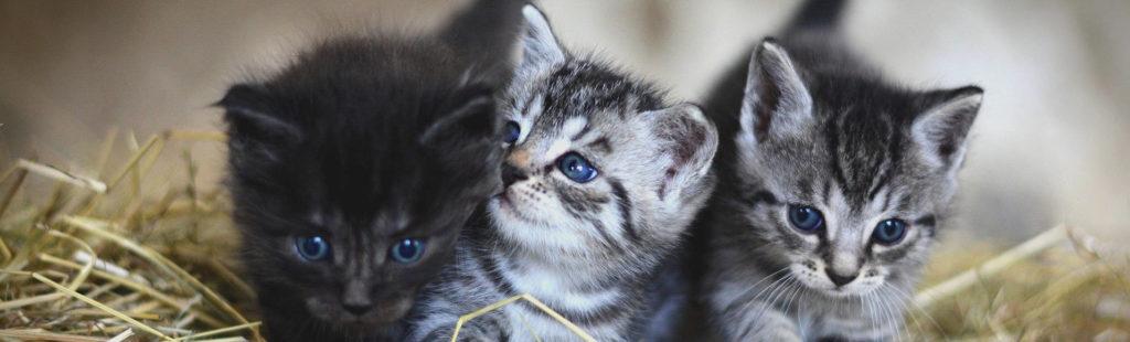Notre liste de prénoms chat